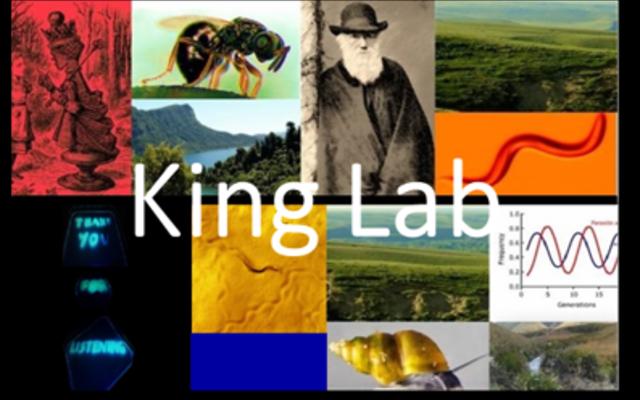 King lab header