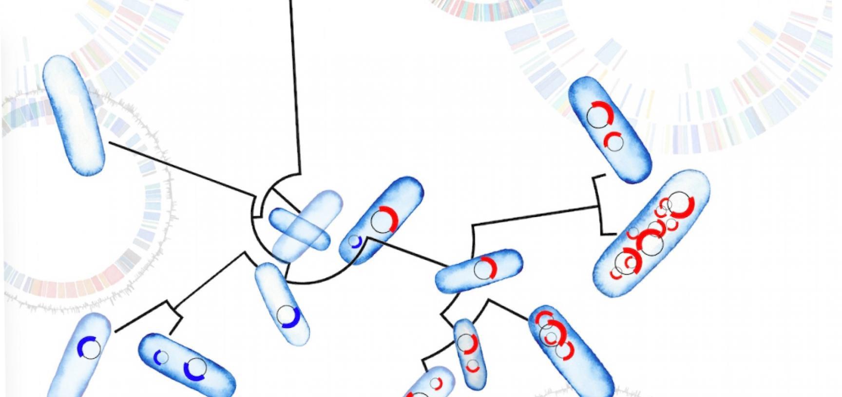 plasmid picture