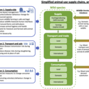 A conceptual diagram of animal-use supply chains and their interfaces