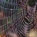 spidersilk