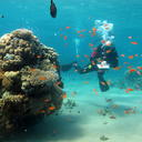 survey on the status of the coral reef at the northern tip of the gulf of aqaba 4 photo  asaf zvuluni