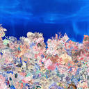 cheney coral design print web