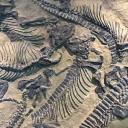 fossilfinds