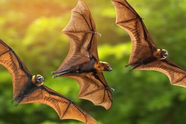 shutterstock bats resize