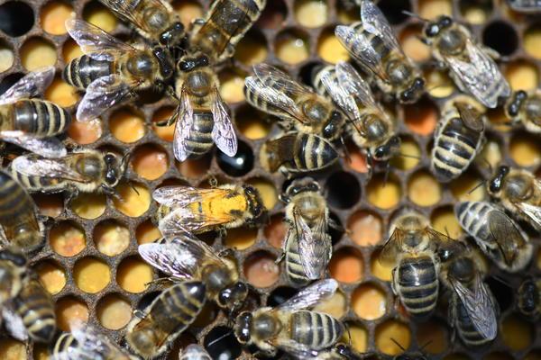 bees on beebread