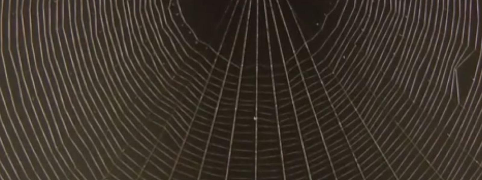 spider web hero
