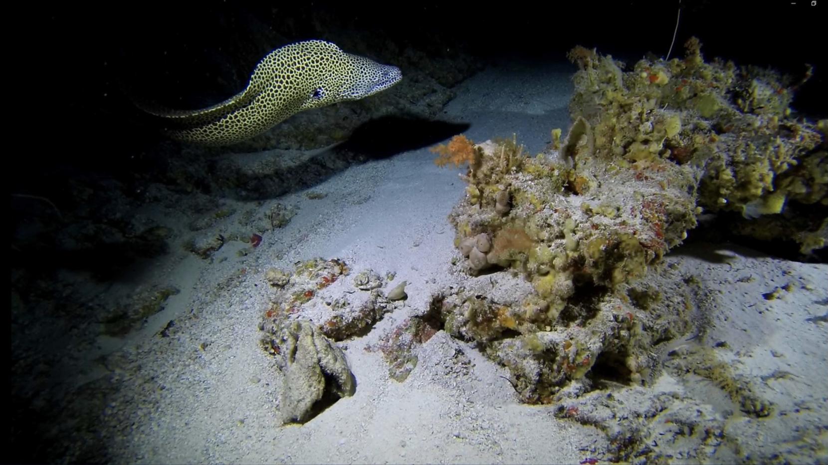 Credit- Nekton: Moray eel at 120m off Aldabra